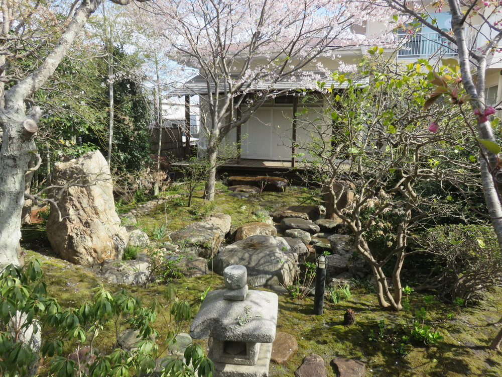 織部灯篭前からの景色です。桜がとても綺麗です。桜としてはまだ若木ですが、このお庭に流れた時間を充分に感じさせてくれます。