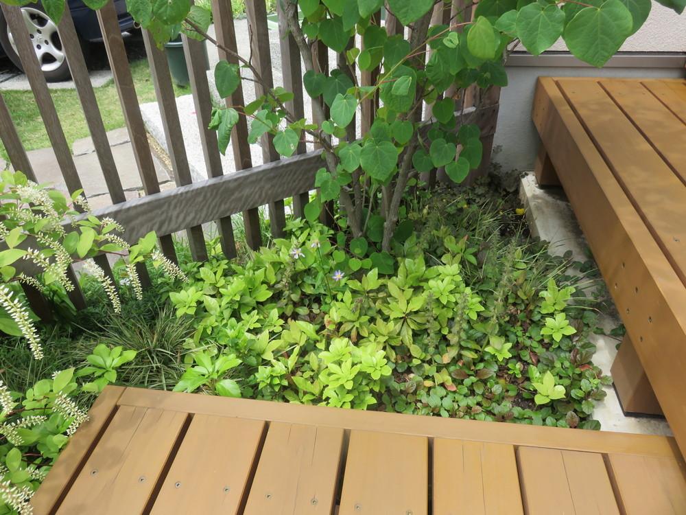 小さなスペースにも植栽します。